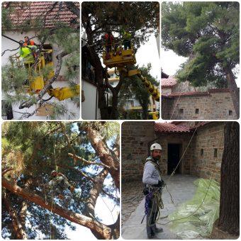 Κοπή επικίνδυνων ψηλών δέντρων με χρήση γερανών και παρουσία ειδικά εκπαιδευμένων εναεριτών
